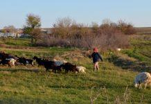 Μόνο 6 θέσεις αγρεργατών κατένειμε η τελευταία ΚΥΑ στην Λάρισα λέει ο «Γάλα Ελάσς»