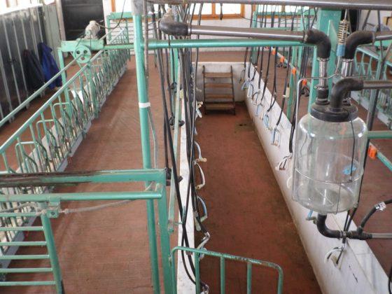 Βλάστη Κοζάνης: Τρόπος για τη στήριξη της ορεινής κτηνοτροφίας