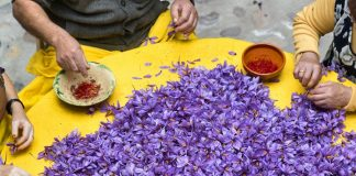 Εντός Μαΐου αναμένονται οι πρώτες εξαγωγές κρόκου Κοζάνης στην Κίνα