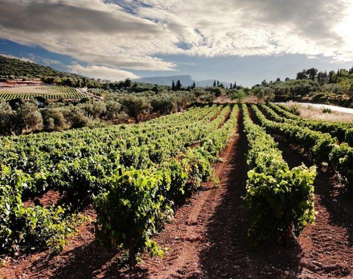 Θεσσαλονίκη: Πραγματοποιήθηκαν για τρίτη χρονιά οι δύο διεθνείς διαγωνισμοί οίνου