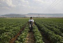 ΟΠΕΚΕΠΕ: Με την εξόφληση της Βασικής οι «κομμένοι» της προκαταβολής