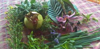 Η απάντηση της Β. Εύβοιας στα φαρμακευτικά φυτά