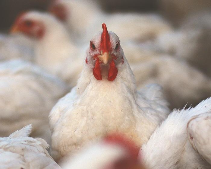 Κερδίζει χώρο στο καλάθι του καταναλωτή το φρέσκο παρασκευασμένο κοτόπουλο