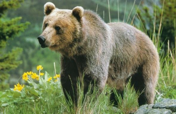 Κοζάνη: Ανεξέλεγκτη η κατάσταση με τις αρκούδες