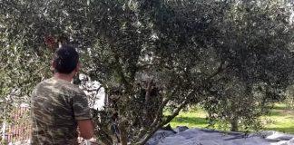 Κρήτη: «Ουρές» για το Πρόγραμμα Νέων Αγροτών