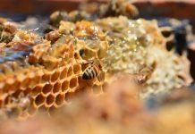 Ημερίδα του ΕΛΓΟ Σκύδρας για τη Διαχείμανση και τα προβλήματα των μελισσοσμηνών