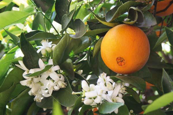 Πορτοκάλι: Ξεκίνημα με το δεξί για τα Μέρλιν