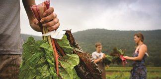 «Σχολεία αγρού» από την Περιφέρεια Ανατολικής Μακεδονίας - Θράκης