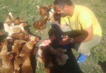 Χωριάτικα κοτόπουλα ελευθέρας βοσκής