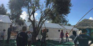 Πρόσφυγες στη Μόρια έβγαλαν το δικό τους λάδι