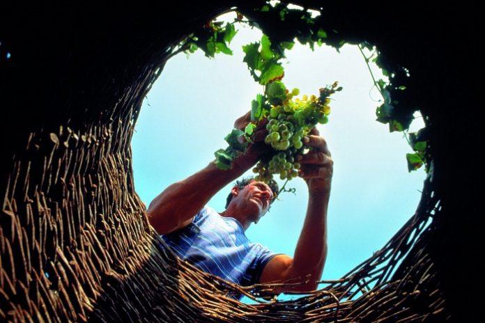 Ζίτσα: Ενημερωτική συνάντηση για τις ομάδες παραγωγών αμπελοκαλλιεργητών