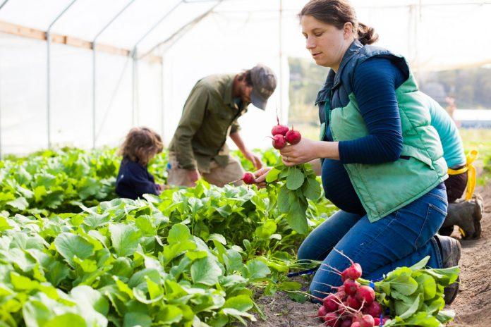 Πάνω από 400 νέες αγρότισσες της Δ.Ελλάδας συμμετέχουν στο πρόγραμμα εγκατάστασης νέων γεωργών