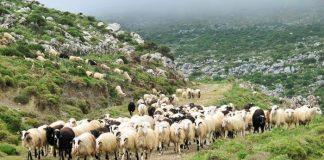Άμεση ανταπόκριση Αραχωβίτη στην παρέμβαση Τατούλη για την εξισωτική αποζημίωση