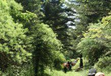 Η κεφαλληνιακή ελάτη κυριαρχεί στη Βυτίνα