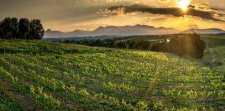 Κόκκινο κρασί με χυμό από αρώνια έβγαλαν σε παραγωγή δύο αδέλφια από την Πιερία
