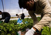 Τροπολογία Πετρόπουλου για μεροκάματα εργατών γης