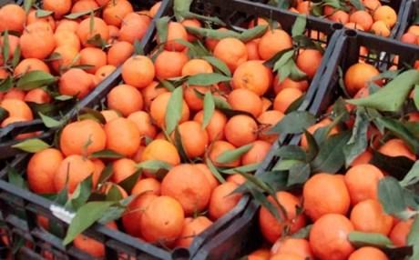 Δεσμεύτηκαν 2,4 τόνοι πορτοκάλια με ελλιπή σήμανση στον Πειραιά