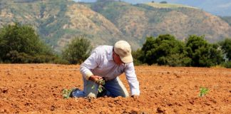 Πρόγραμμα κατάρτισης ανέργων στην πρωτογενή παραγωγή
