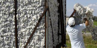 Μ. Δευτέρα στους δικαιούχους τα 170 εκατ. ευρώ της Ειδικής Ενίσχυσης Βάμβακος σύμφωνα με τον ΟΠΕΚΕΠΕ