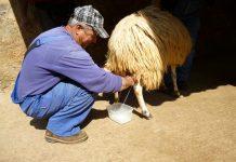 Άμεσα μέτρα στήριξης της κτηνοτροφίας ανακοίνωσε ο Σταύρος Αραχωβίτης