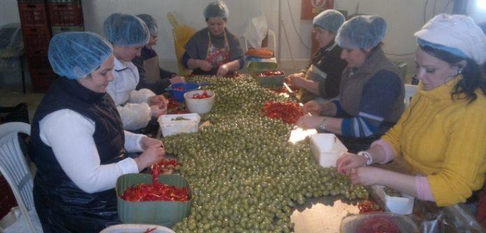 Χαλκιδική: Πρότυπη μονάδα επεξεργασίας γεμιστής ελιάς και πιπεριάς τουρσί