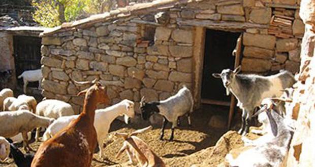 Προς εξαίρεση από τον ΕΝΦΙΑ οι σταύλοι, εκτός τεκμηρίων τα αγροτικά Ι.Χ.