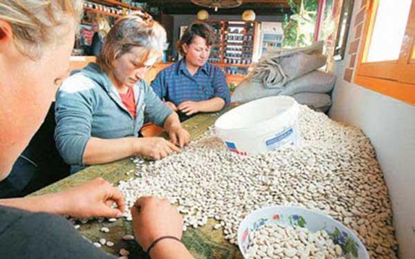 Αγροτικοί Σύλλογοι Καστοριάς: «Kαρκίνωμα οι ελληνοποιήσεις φασολιών, μήλων και σιτηρών»