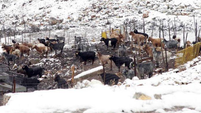 H ΕΝΠΕ ζητά δίκαιες και γρήγορες αποζημιώσεις σε αγρότες και κτηνοτρόφους