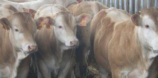 Μοσχαρίσιο κρέας με την επωνυμία «Άρωμα» και έξι φορές περισσότερα λιπαρά οξέα Ω3, από τους αδελφούς Κουτσιώφτη