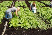 """ΠΕ Αιτωλοακαρνανίας: Ολοκληρώθηκε το πρόγραμμα """"Βιολογική Γεωργία – Κτηνοτροφία 2012-2016"""""""
