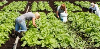 ΟΠΕΚΕΠΕ: Υποβολή παραστατικών συμμόρφωσης ειδικών διατάξεων του Μέτρου για «Βιολογικές Καλλιέργειες»