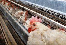 Ο Υφ. Περιβάλλοντος συνυπογράφει την Πρωτοβουλία Πολιτών για τον τερματισμό της εκτροφής παραγωγικών ζώων σε κλουβιά