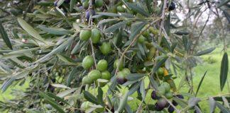 ΔΑΟΚ Μεσσηνίας: Πληρωμές βιολογικής γεωργίας έτους 2014 (Νέα Πενταετία)