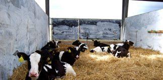 Η παραγωγικότητα των εκτροφών μεγάλων ζώων