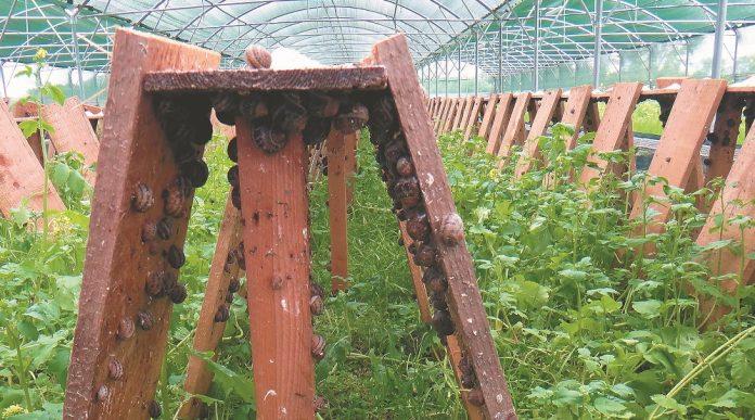 Χαβιάρι... σαλιγκαριού από την Αμερικανική Γεωργική Σχολή