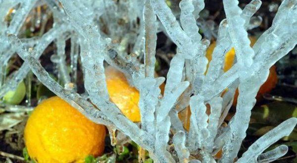 Να «τρέξουν» εκτιμήσεις και αποζημιώσεις για τον παγετό ζητά η Περιφέρεια Κ. Μακεδονίας
