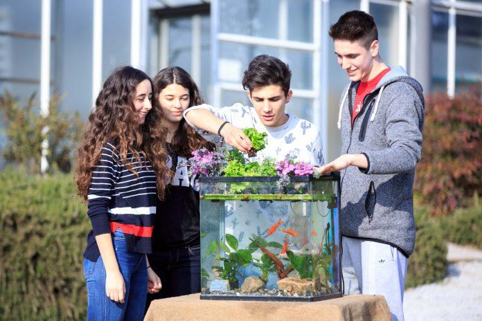 Μαθητές της Αμερικανικής Γεωργικής Σχολής καλλιέργησαν λαχανικά με ενυδρειοπονία