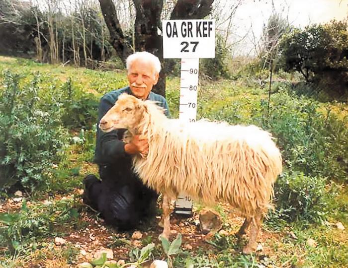 Φυλή Κεφαλληνίας