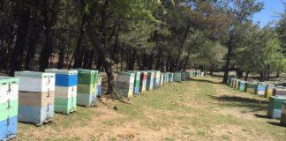 Κρήτη: «Βουλιάζουν» τους μελισσοκόμους οι ελληνοποιήσεις