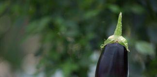 Μελιτζάνες με... συμβόλαια για τον ΑΣ Παραγωγών Φερών