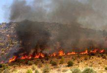 Ανύπαρκτη η διαχείριση των δασών επισημαίνει το ΓΕΩΤΕΕ Κρήτης