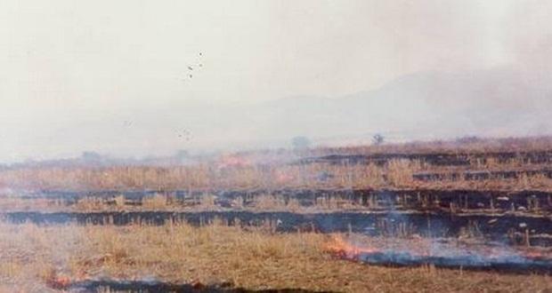 «Ποινή» 3% στις ενισχύσεις αγροτών λόγω καύσης σιτοκαλαμιών