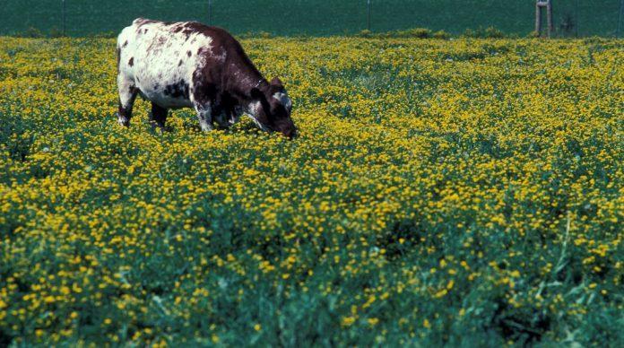Από 11 Απριλίου η προκήρυξη για τη Βιολογική Κτηνοτροφία - Ποιες περιοχές αφορά