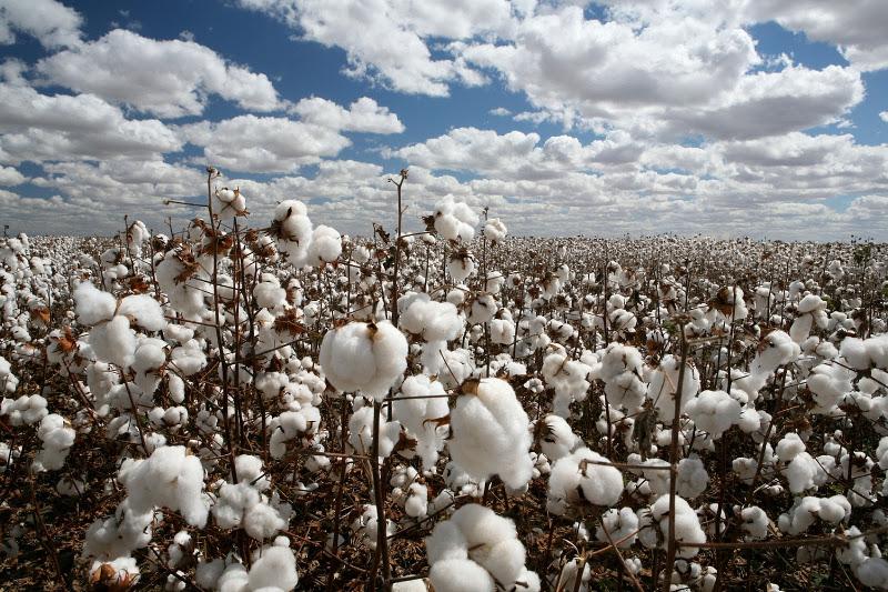 Δίχτυ προστασίας στους παραγωγούς υφαίνει η συνεργασία Εκκοκκιστηρίων Κουρούδη και Interamerican