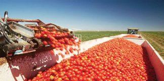 Ημερίδα για τη βιομηχανική ντομάτα την Τρίτη 9 Απριλίου στο Τυμπάκι της Κρήτης
