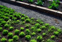 Θεσσαλονίκη: Χιλιάδες πολίτες έχουν καλλιεργήσει μέσα σε επτά χρόνια τα λαχανικά τους στους περιαστικούς Λαχανόκηπους του ΑΠΘ