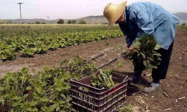 Τρίκαλα Ημαθίας: Με επιτυχία ολοκληρώθηκε ημερίδα για τον αγροτοδιατροφικό τομέα