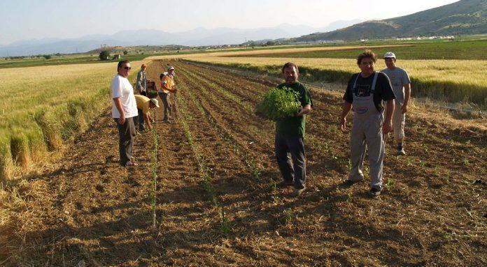 Πώς υπολογίζονται οι ασφαλιστικές εισφορές των αγροτών από το 2018