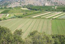 Προεδρικό διάταγμα για τις χρήσεις γης: Οι επιτρεπόμενες δραστηριότητες σε αγροτικές περιοχές