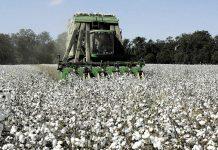 Ανοίγει η πόρτα για την εισαγωγή βαμβακοσυλλεκτικών μηχανών από τρίτες χώρες